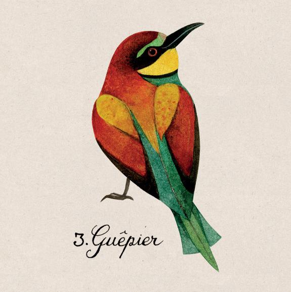 guepier3
