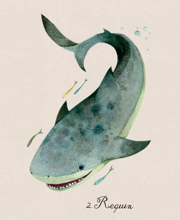 requin-dessin